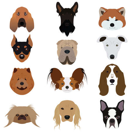 bloodhound: Set and type of many Dog Vectors and Icons