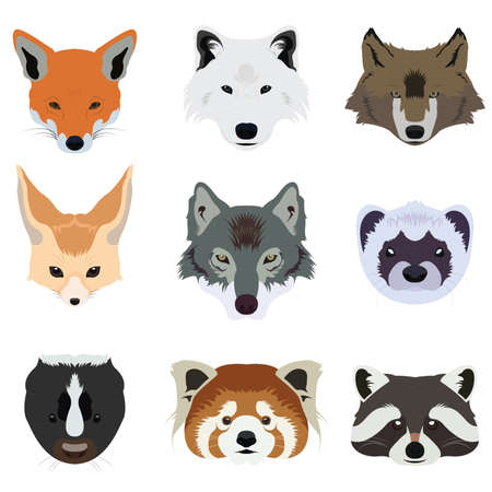 raccoon: Set of Wolf Fox and Wildlife Animals Vector and Icon