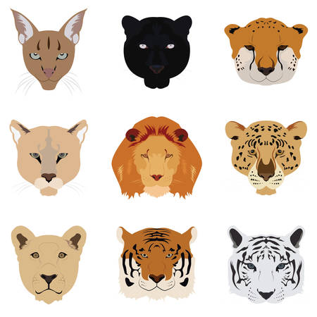 Set of Cat Tiger and Lion Vector and Icon Vector