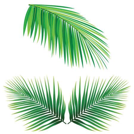 coconut leaf: Coconut Leaf  Illustration