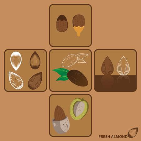 amande: Almond vectorielle et de l'Ic�ne Illustration