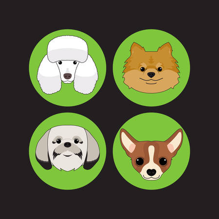 shih tzu: Dog and Puppy Set Poodle Vector and Icon