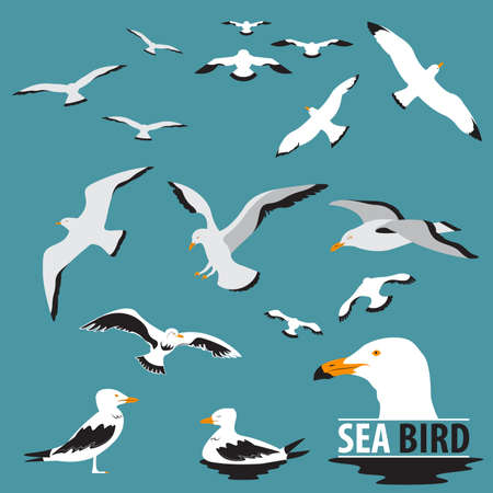 seabird: Set of Sea Bird and Seagull