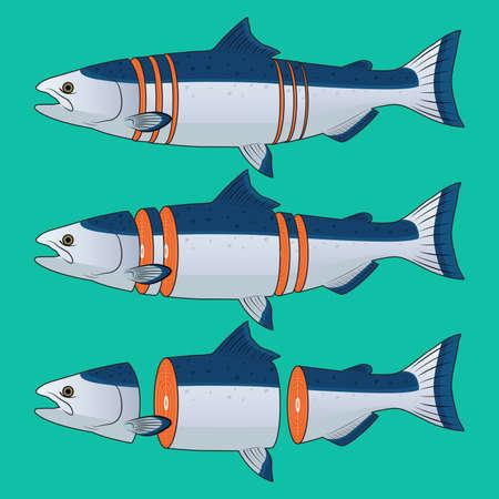 salmon fish: Cut of Salmon Fish Vector