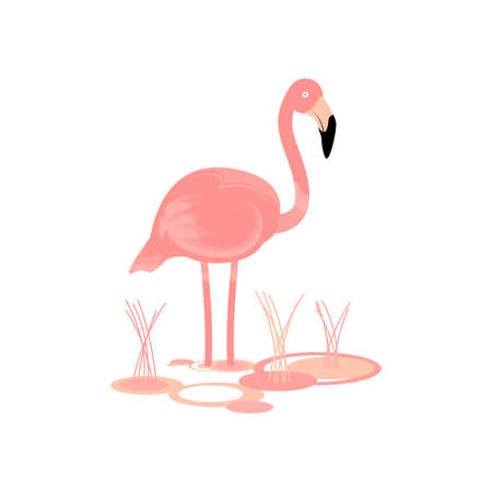 aviary: Flamingo Bird