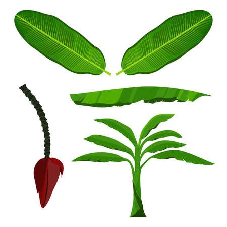 Banana Leaf, Tree and Blossom vector illustration Illustration