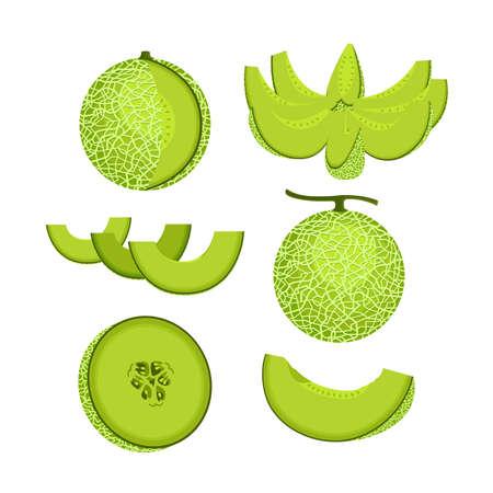 Green melon fruit icon on white background illustration. Illustration