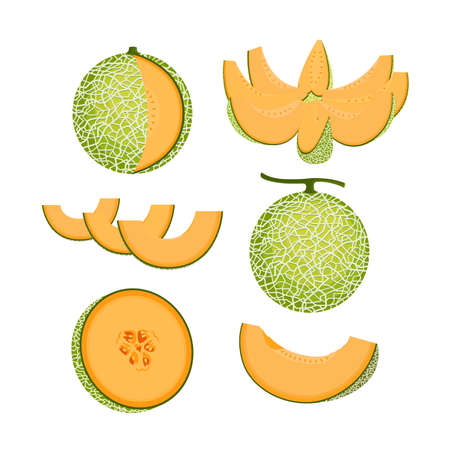 Orange Melon Fruit Isolated Vector and Icon Illustration