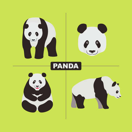 Panda Wildlife Chinese Animal Vector