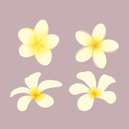 Plumeria flower and floral spa vector.