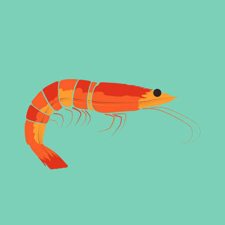 Shrimp Prawn Vector and Icon for Logo and App