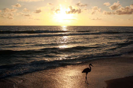Florida Sunset Banque d'images - 4957645