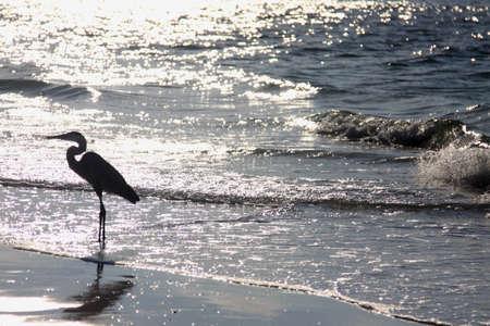 sunrise, heron on beach
