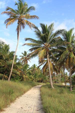 Dominicains jungle Pulms à Punta Cana Banque d'images - 30219298