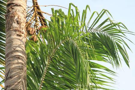 Feuilles de palmier sur fond de ciel bleu. Banque d'images - 44707669