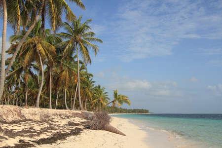République Dominicaine. Belle plage de Punta Cana Banque d'images - 50324107