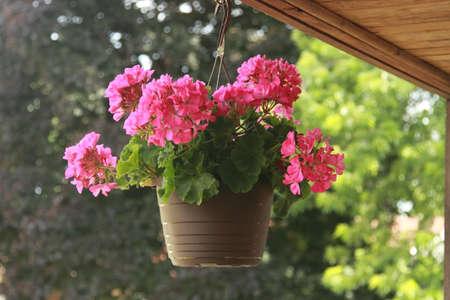 Fleurs de jardin Blossom Banque d'images - 61922594