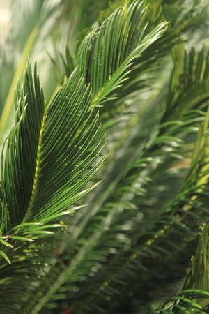 Feuilles d'arbres, fond de la nature Banque d'images - 67942262