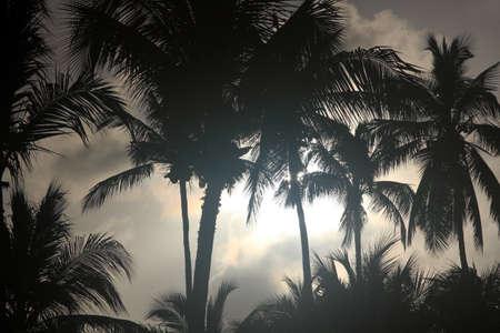 Palmiers, fond naturel Banque d'images - 71413039