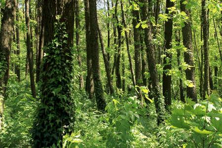 Fond de la nature. journée ensoleillée dans la forêt Banque d'images - 93837875
