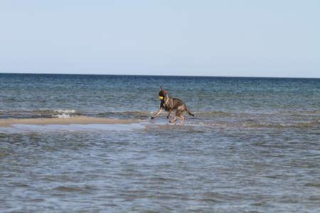 german shepherd dog on sand bank photo