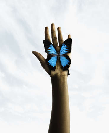 Butterfly on a humans palm