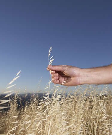 A male hand picking wild grasses