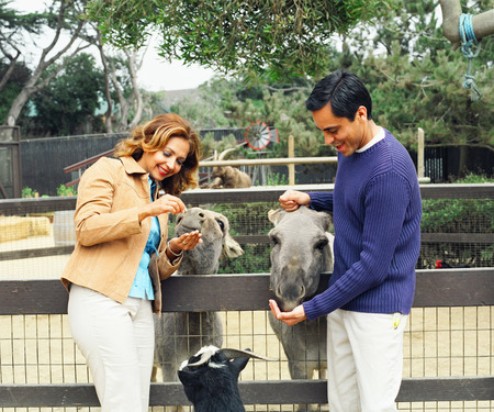 Mid adult couple feeding animal at a zoo