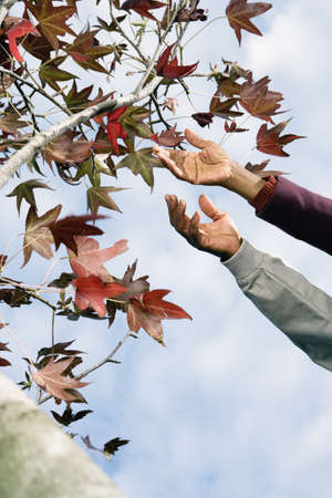 African couples  hands reaching for leaves on tree