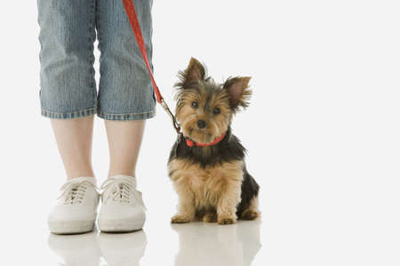 Studio shot of girl standing next to Yorkshire Terrier puppy LANG_EVOIMAGES