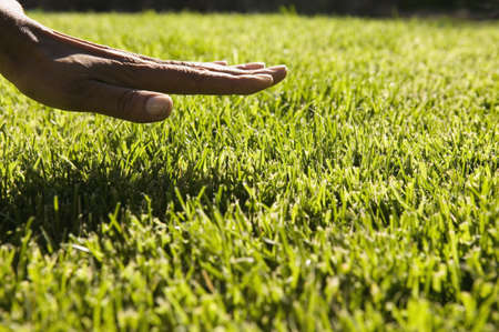 Close up of hand over grass