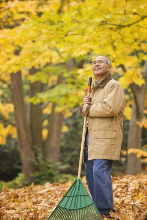 Hispanic man raking autumn leaves