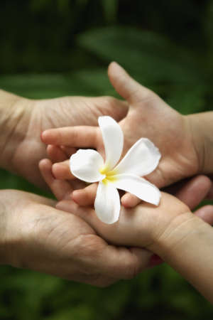 Father and child holding frangipani flower LANG_EVOIMAGES