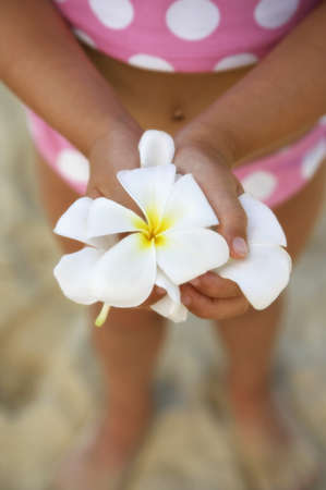 Close up of frangipani flowers in girls hands at beach