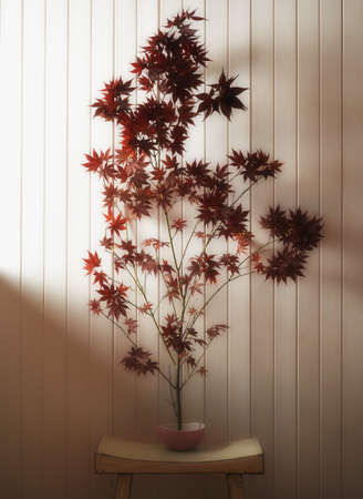 Japanese maple on table indoors LANG_EVOIMAGES