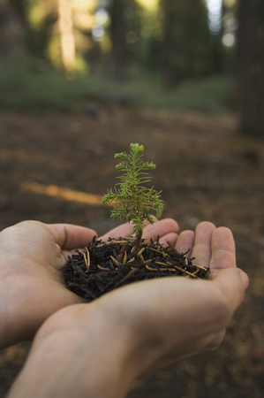 Woman holding mulch and small tree LANG_EVOIMAGES