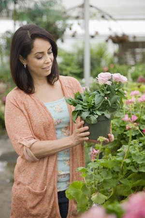 Hispanic woman shopping for flowers in nursery