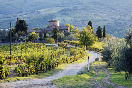 Vineyards and Farmhouse LANG_EVOIMAGES