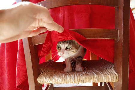 Cat poking head out from under tablecloth