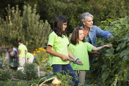 Older woman and children picking vegetables in garden