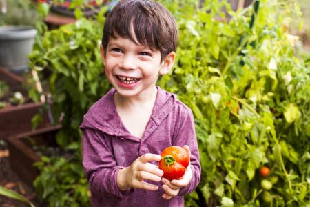Mixed race boy holding tomato in garden