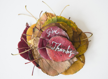 Give Thanks Calligraphy On Dry Autumn Leaves LANG_EVOIMAGES