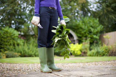 Caucasian Gardener Holding Clippings In Backyard