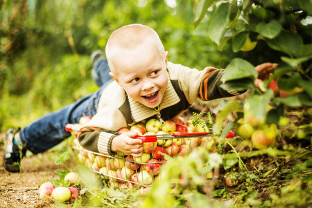 Caucasian boy picking apples in orchard