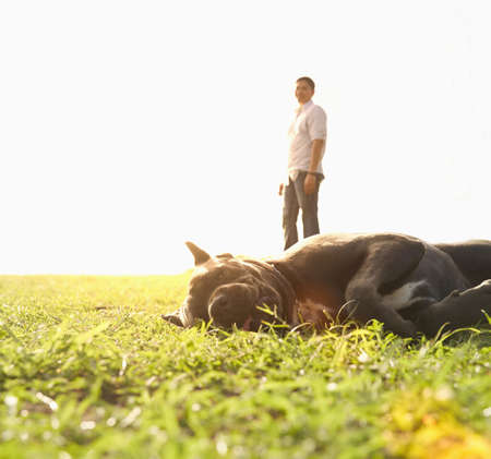 Lazy dog laying in field LANG_EVOIMAGES