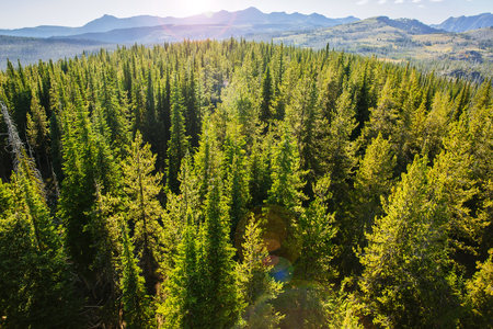Aerial view of treetops in remote forest
