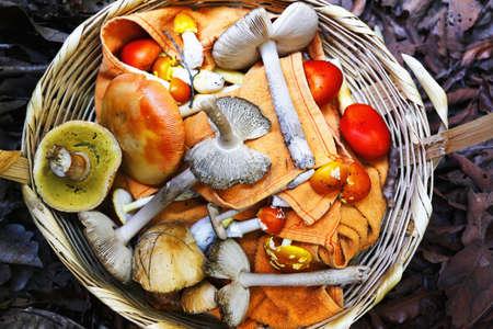 Basket of foraged mushrooms LANG_EVOIMAGES