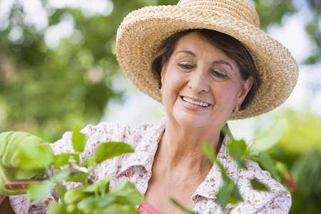 Senior Hispanic woman gardening