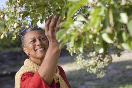 African woman picking fruit LANG_EVOIMAGES