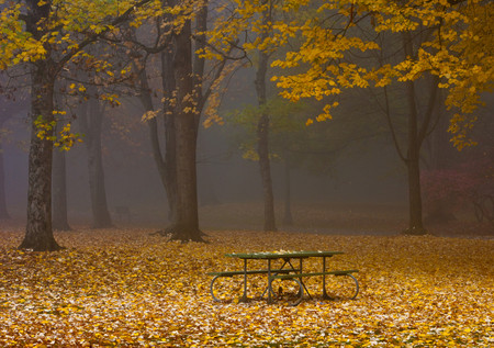Picnic Table in a Park LANG_EVOIMAGES